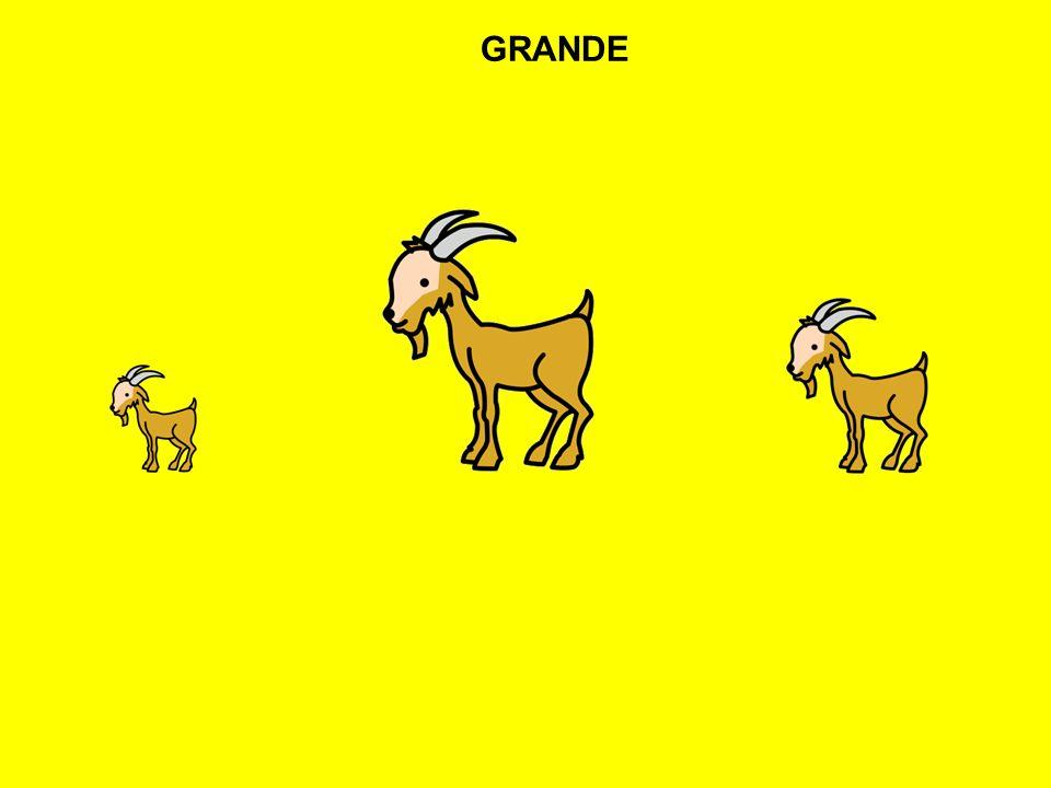 GRANDE