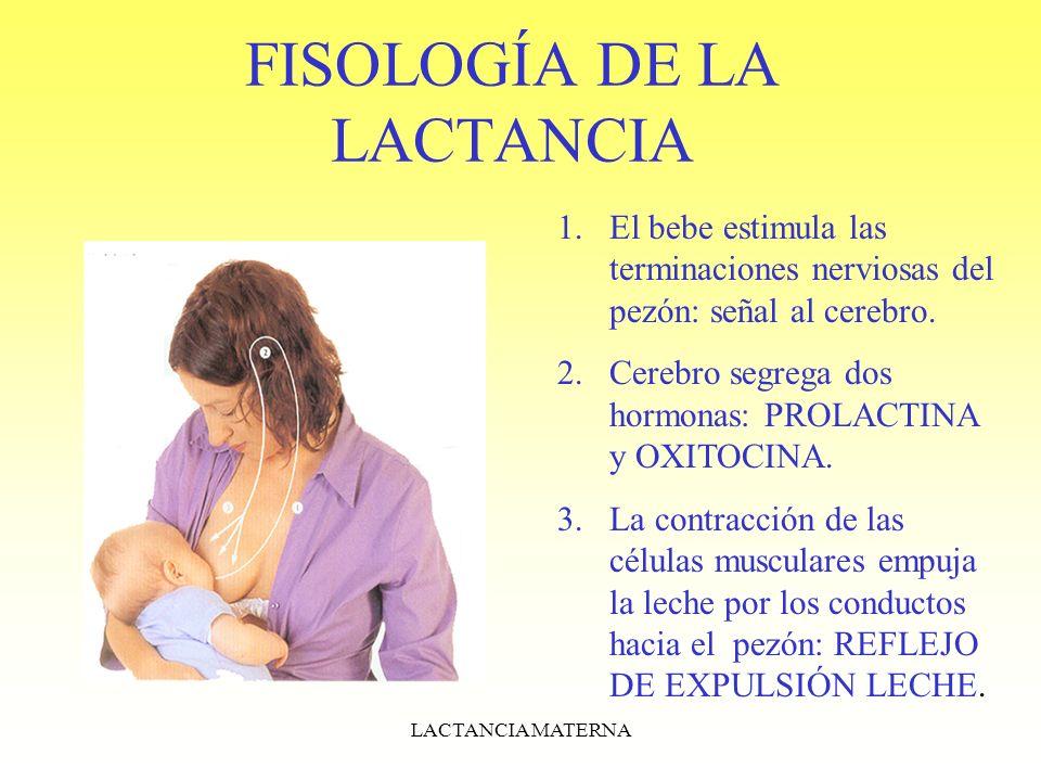 FISOLOGÍA DE LA LACTANCIA