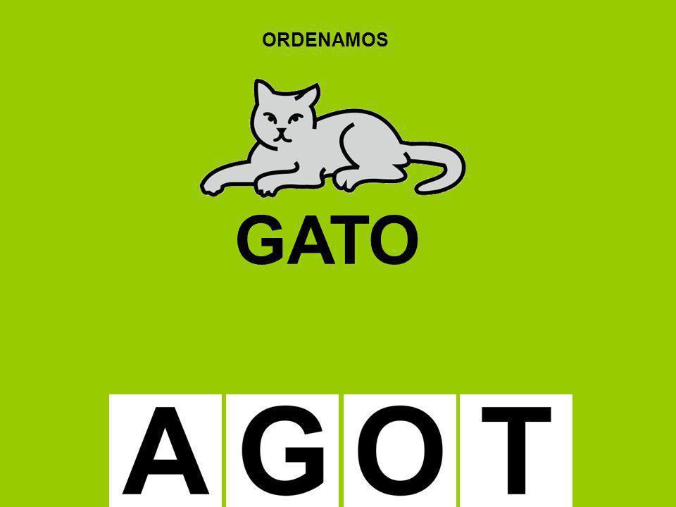 ORDENAMOS GATO