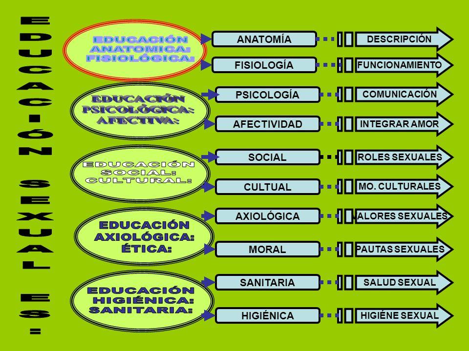 EDUCACIÓN ANATOMICA: FISIOLÓGICA: EDUCACIÓN SEXUAL ES: EDUCACIÓN