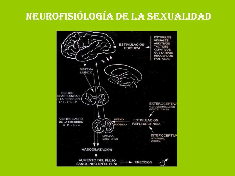 NEUROFISIÓLOGÍA DE LA SEXUALIDAD