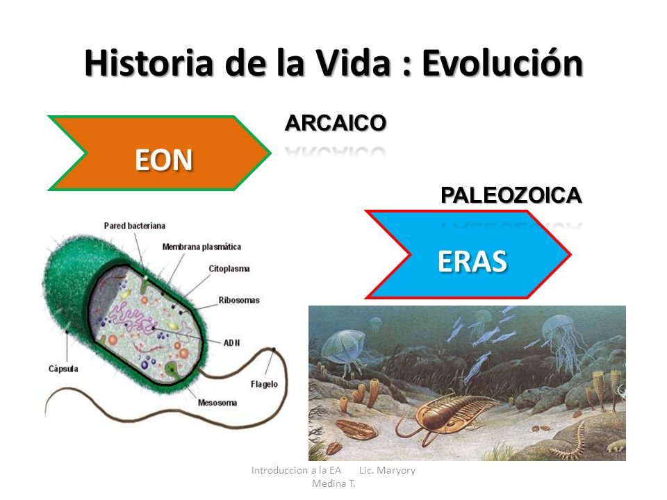 Historia de la Vida : Evolución