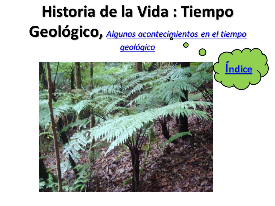 Historia de la Vida : Tiempo Geológico, Algunos acontecimientos en el tiempo geológico