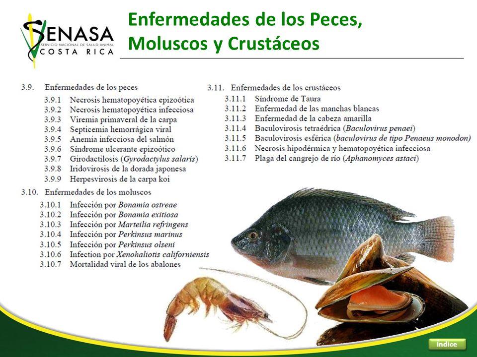 Enfermedades de los Peces, Moluscos y Crustáceos