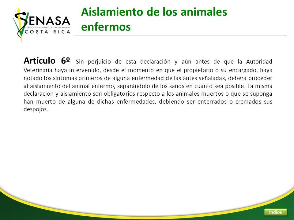 Aislamiento de los animales enfermos