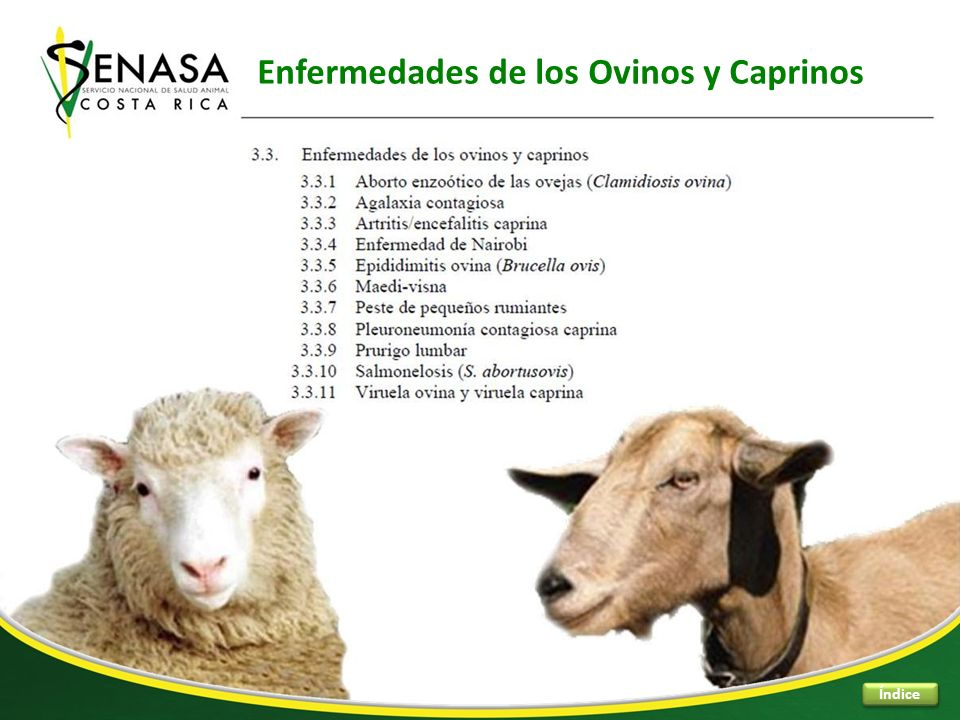 Enfermedades de los Ovinos y Caprinos