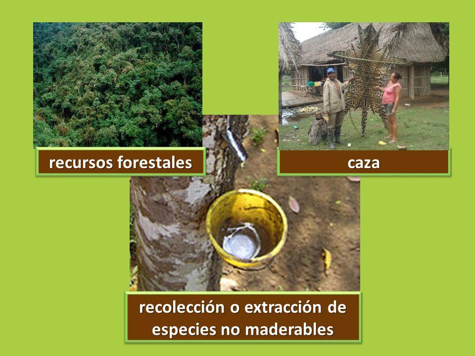recolección o extracción de especies no maderables