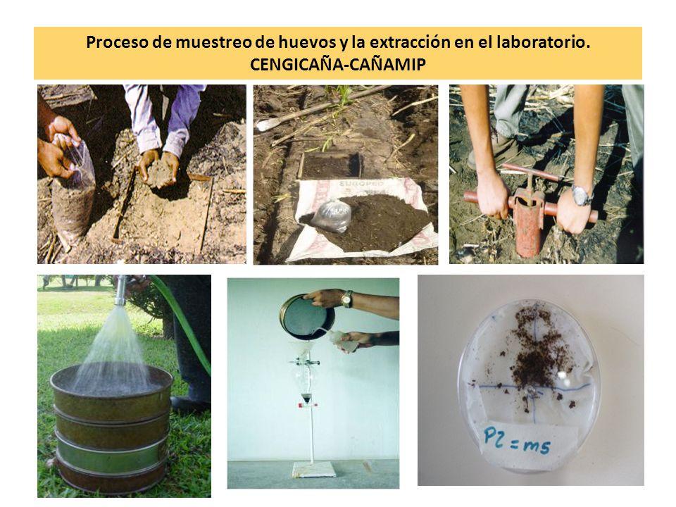 Proceso de muestreo de huevos y la extracción en el laboratorio