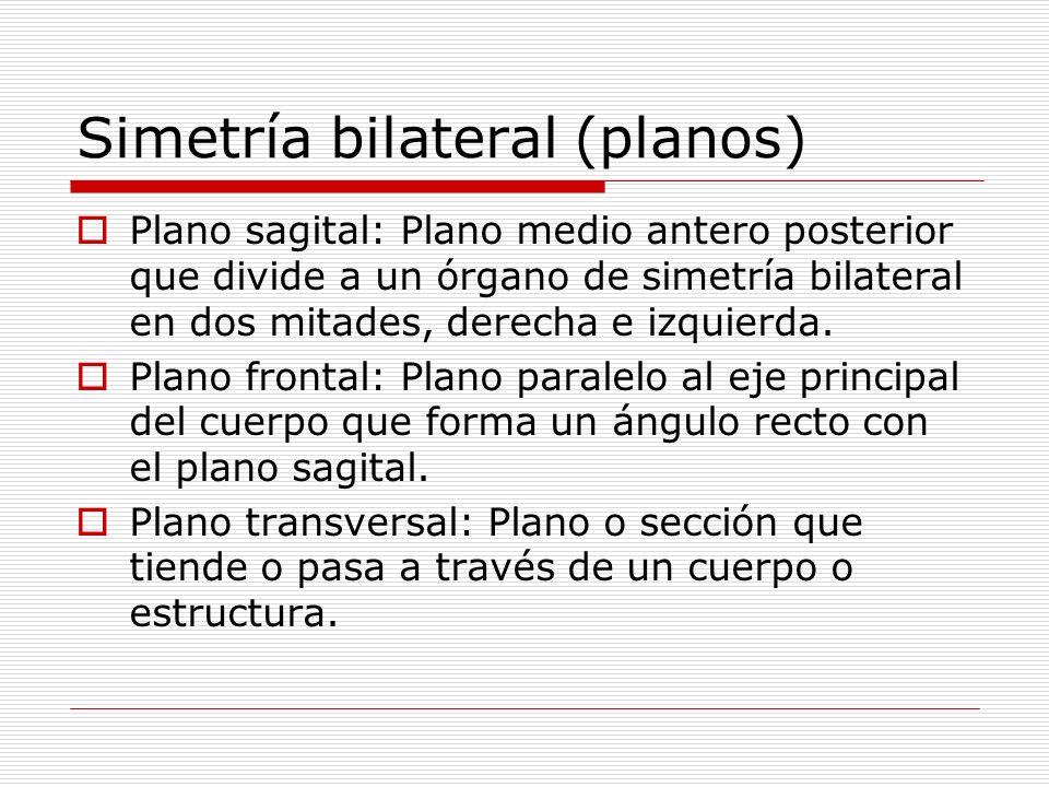 Simetría bilateral (planos)