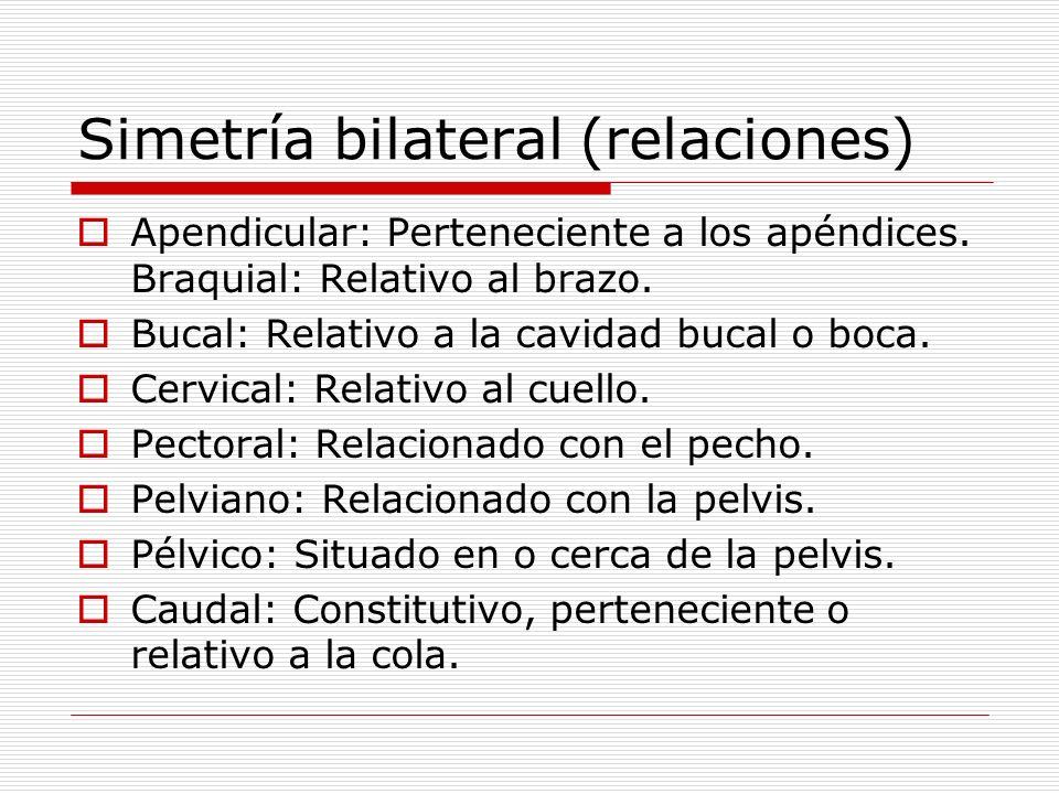 Simetría bilateral (relaciones)