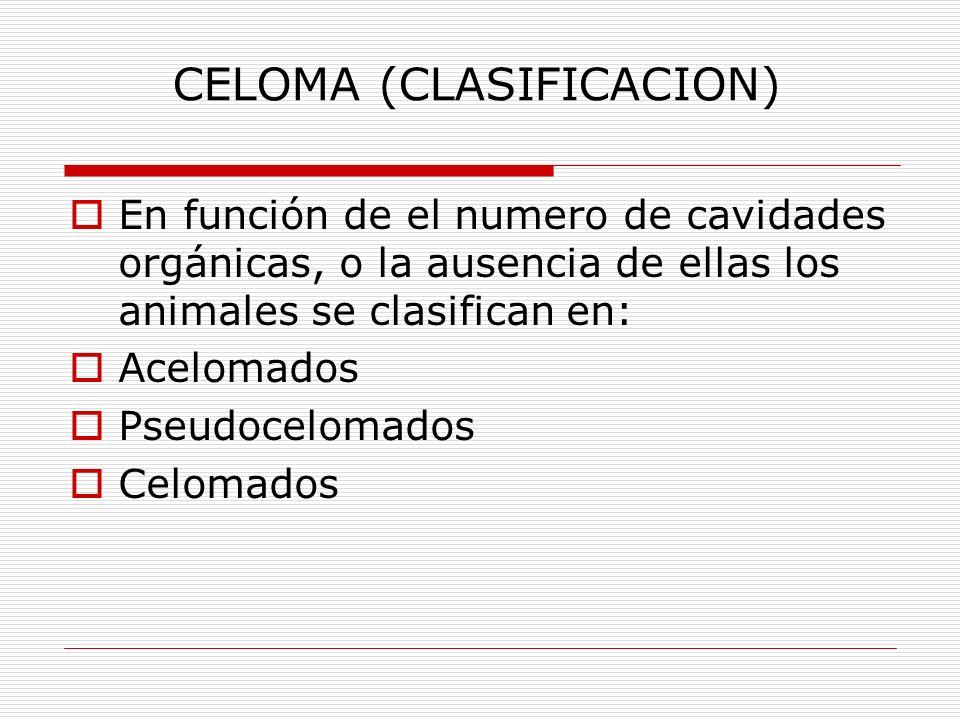 CELOMA (CLASIFICACION)