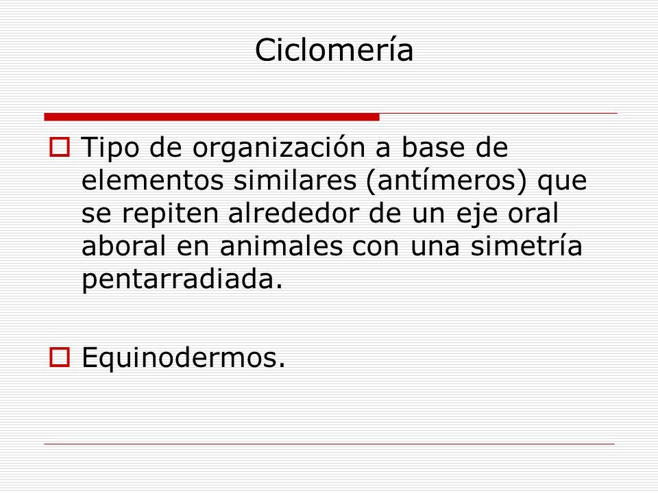 Ciclomería