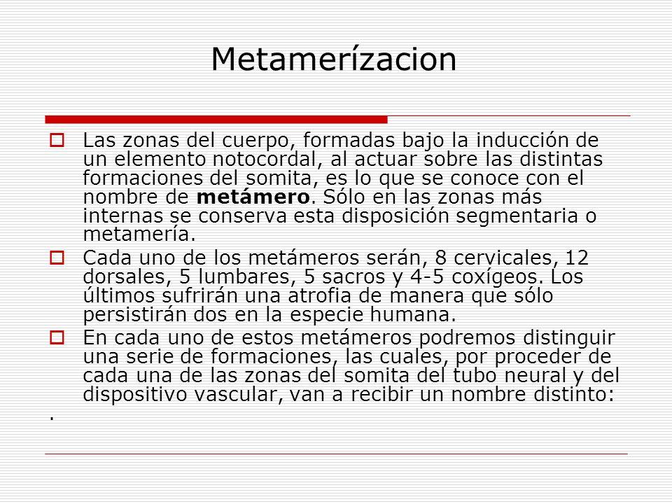 Metamerízacion