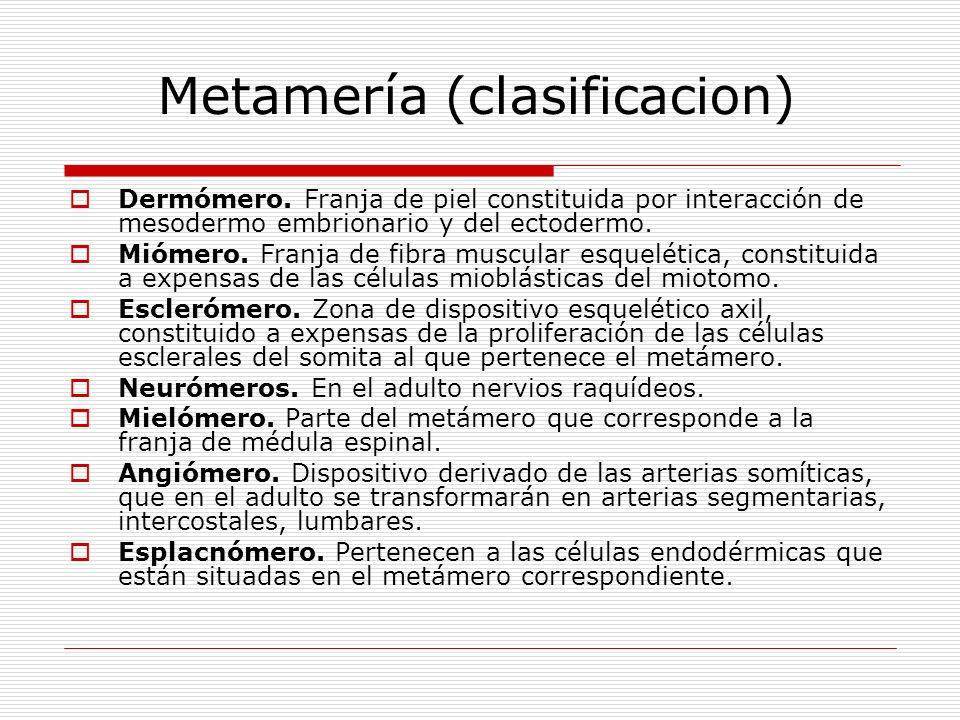 Metamería (clasificacion)