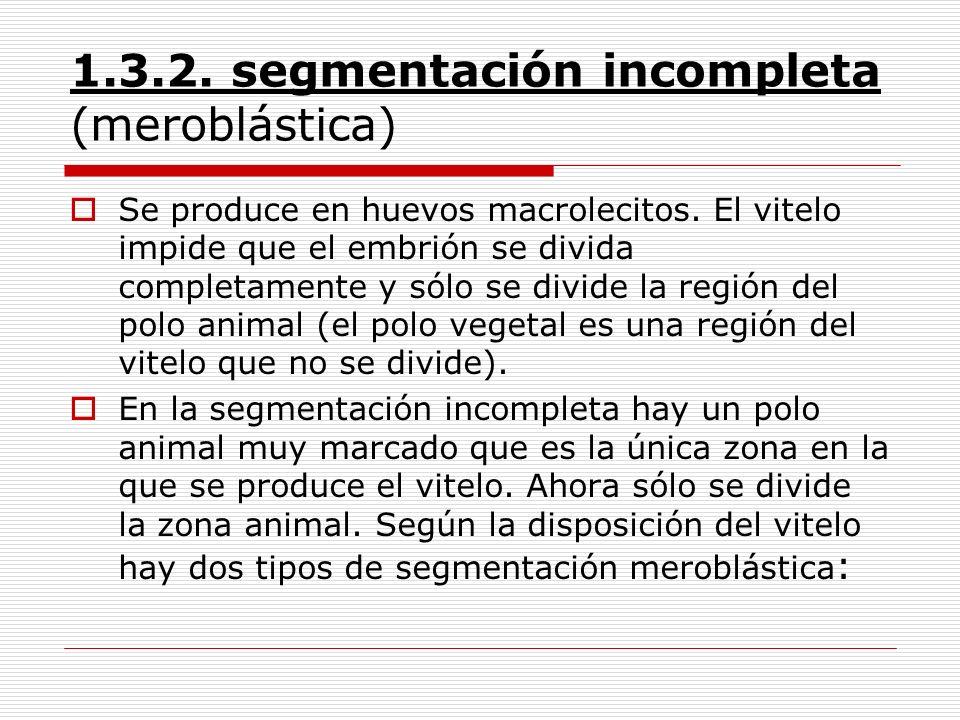 1.3.2. segmentación incompleta (meroblástica)