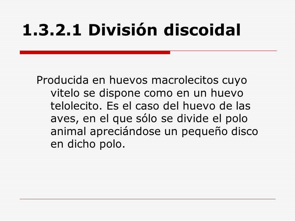 1.3.2.1 División discoidal