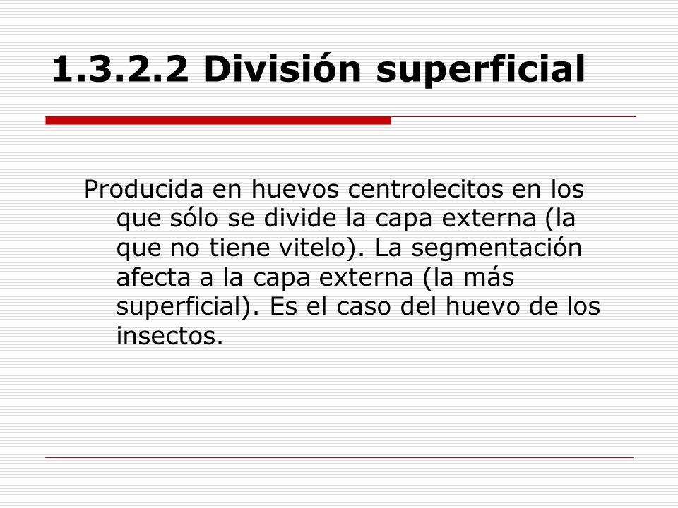 1.3.2.2 División superficial