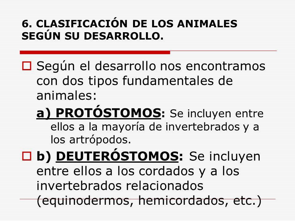 6. CLASIFICACIÓN DE LOS ANIMALES SEGÚN SU DESARROLLO.