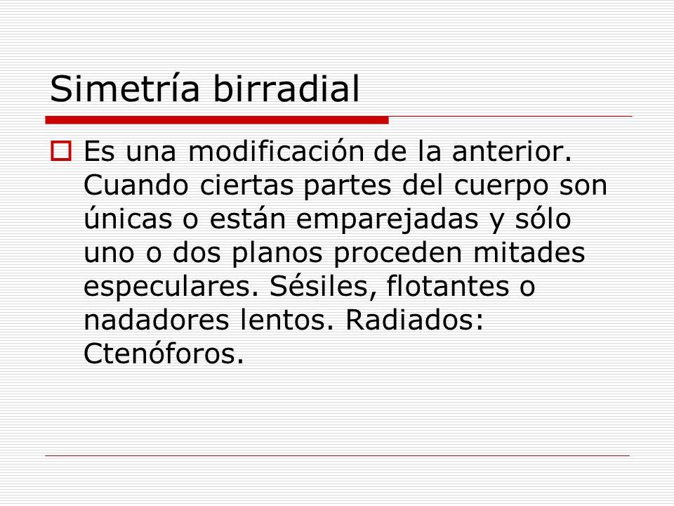 Simetría birradial