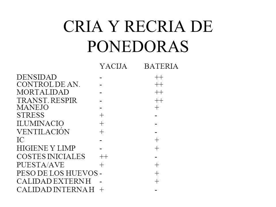 CRIA Y RECRIA DE PONEDORAS