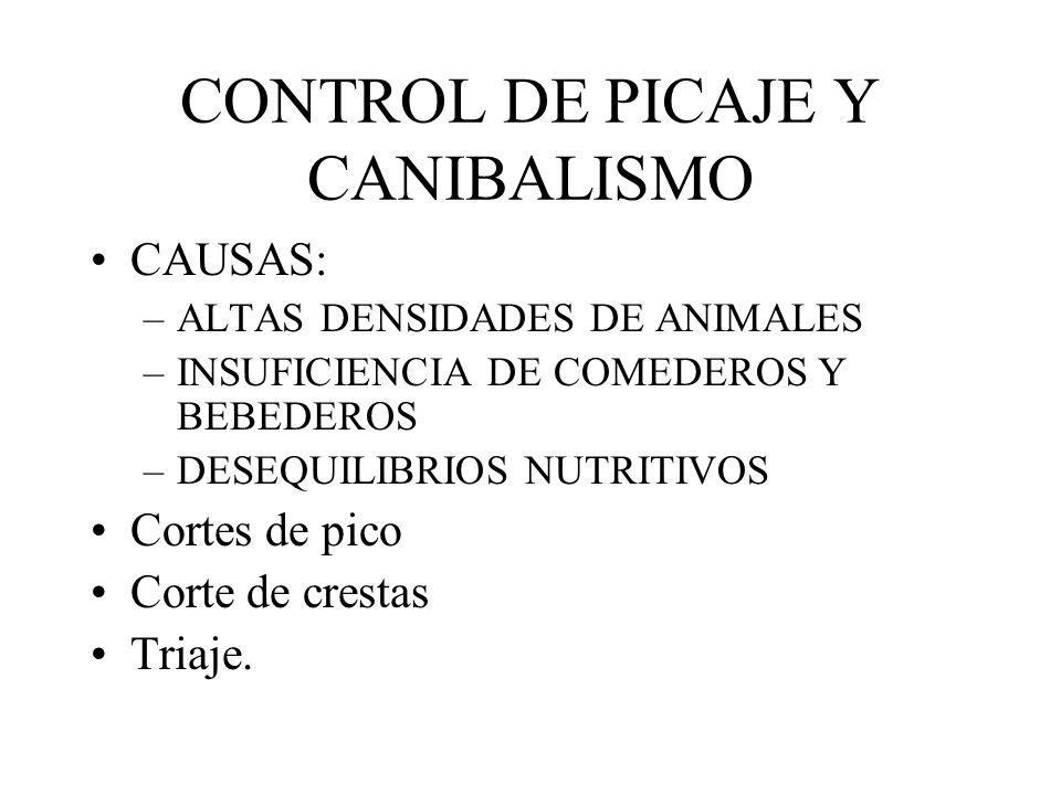 CONTROL DE PICAJE Y CANIBALISMO