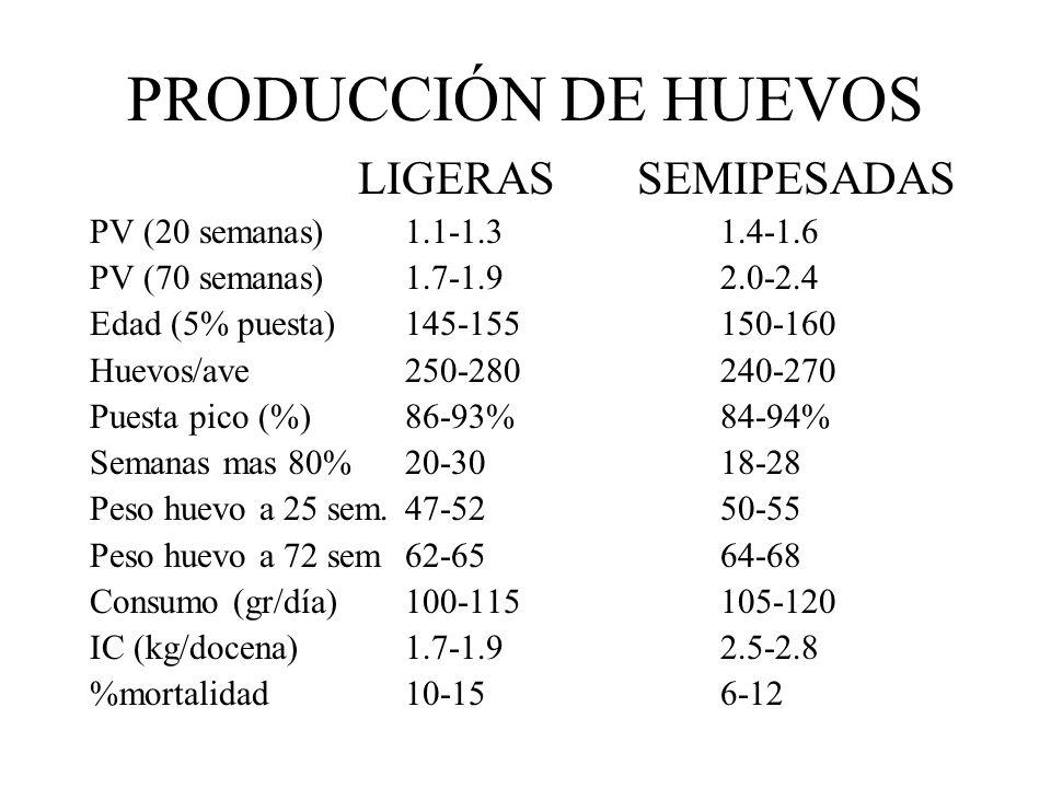 PRODUCCIÓN DE HUEVOS LIGERAS SEMIPESADAS
