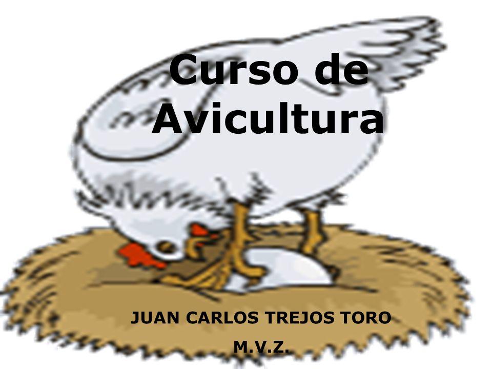 JUAN CARLOS TREJOS TORO