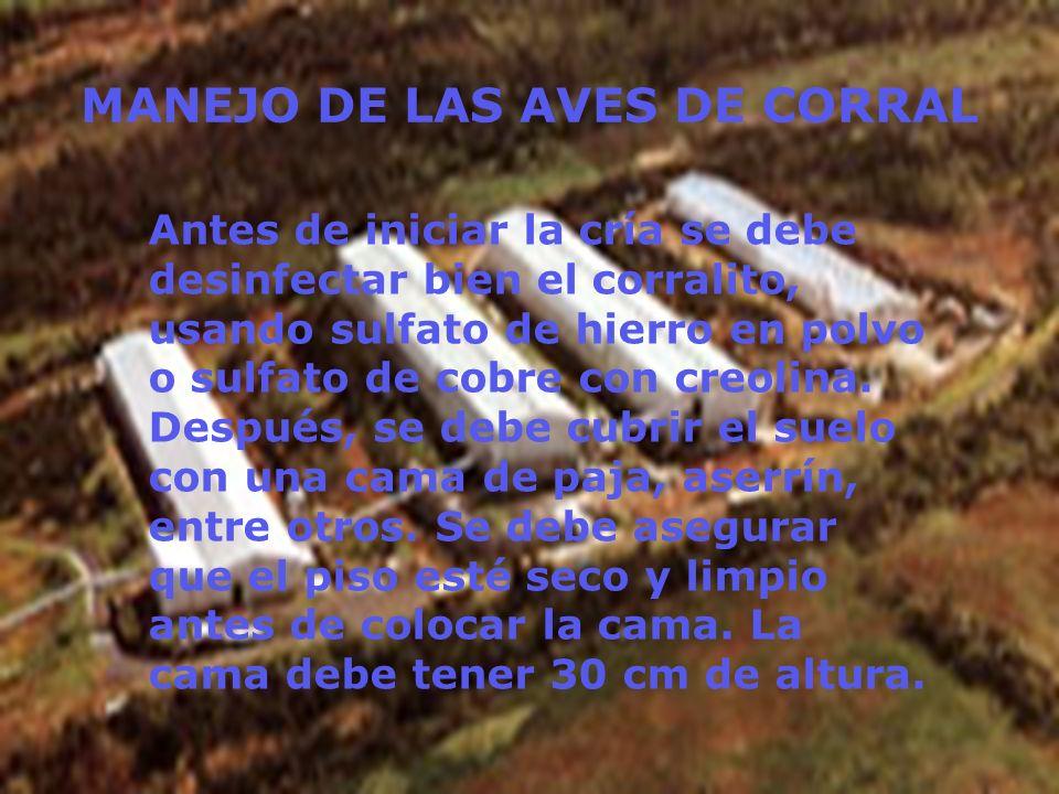 MANEJO DE LAS AVES DE CORRAL