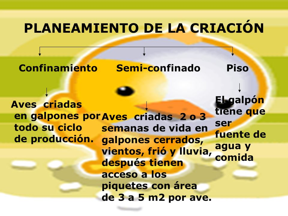 PLANEAMIENTO DE LA CRIACIÓN