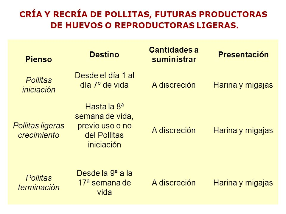 CRÍA Y RECRÍA DE POLLITAS, FUTURAS PRODUCTORAS