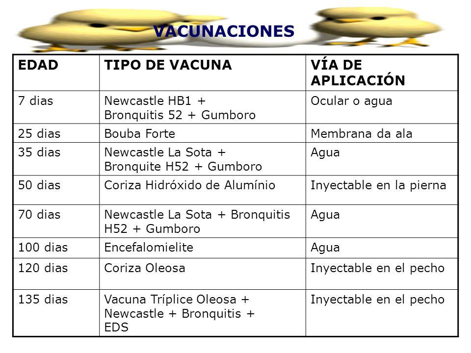 VACUNACIONES EDAD TIPO DE VACUNA VÍA DE APLICACIÓN 7 dias