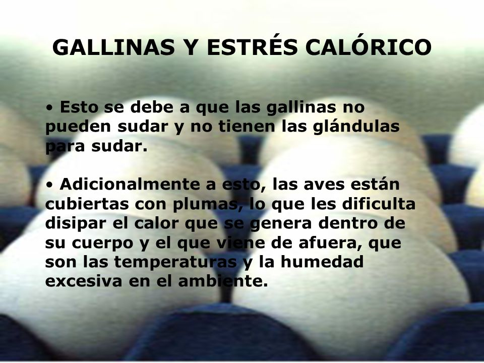 GALLINAS Y ESTRÉS CALÓRICO
