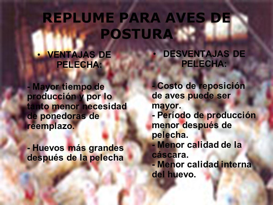 REPLUME PARA AVES DE POSTURA