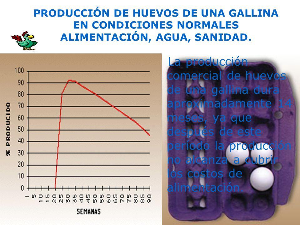 PRODUCCIÓN DE HUEVOS DE UNA GALLINA EN CONDICIONES NORMALES