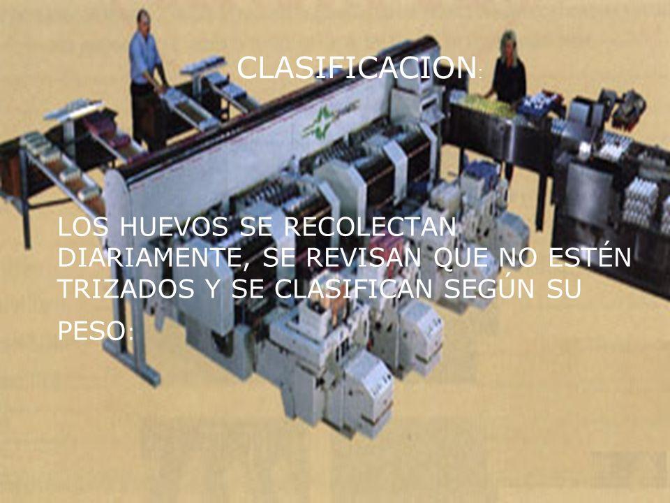 CLASIFICACION: LOS HUEVOS SE RECOLECTAN DIARIAMENTE, SE REVISAN QUE NO ESTÉN TRIZADOS Y SE CLASIFICAN SEGÚN SU PESO:
