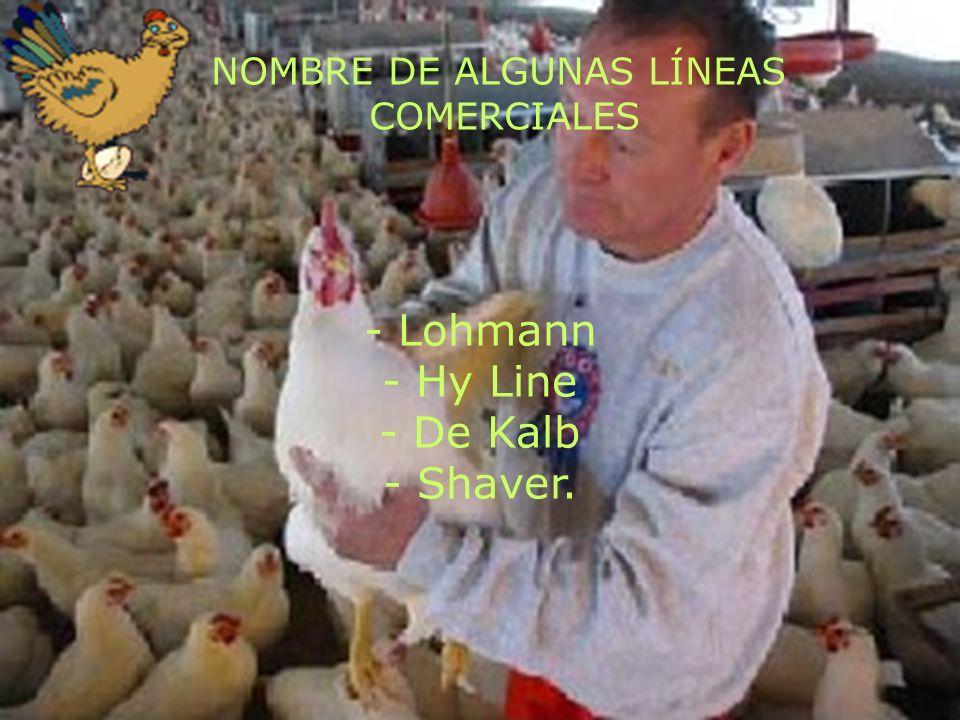 - Lohmann - Hy Line - De Kalb - Shaver.