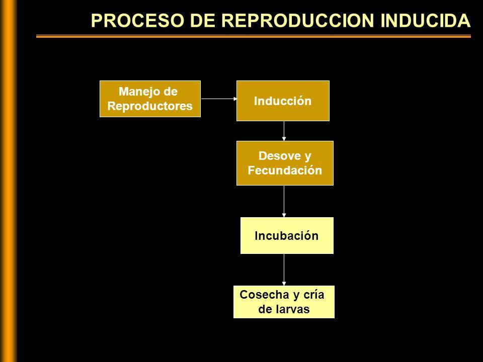 PROCESO DE REPRODUCCION INDUCIDA