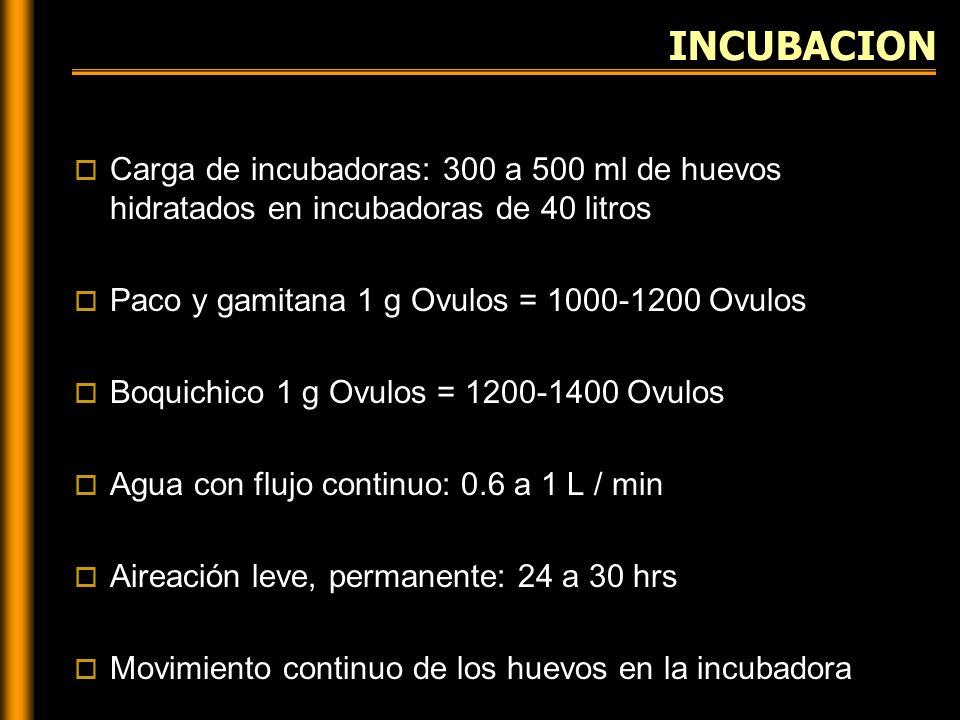 INCUBACION Carga de incubadoras: 300 a 500 ml de huevos hidratados en incubadoras de 40 litros. Paco y gamitana 1 g Ovulos = 1000-1200 Ovulos.