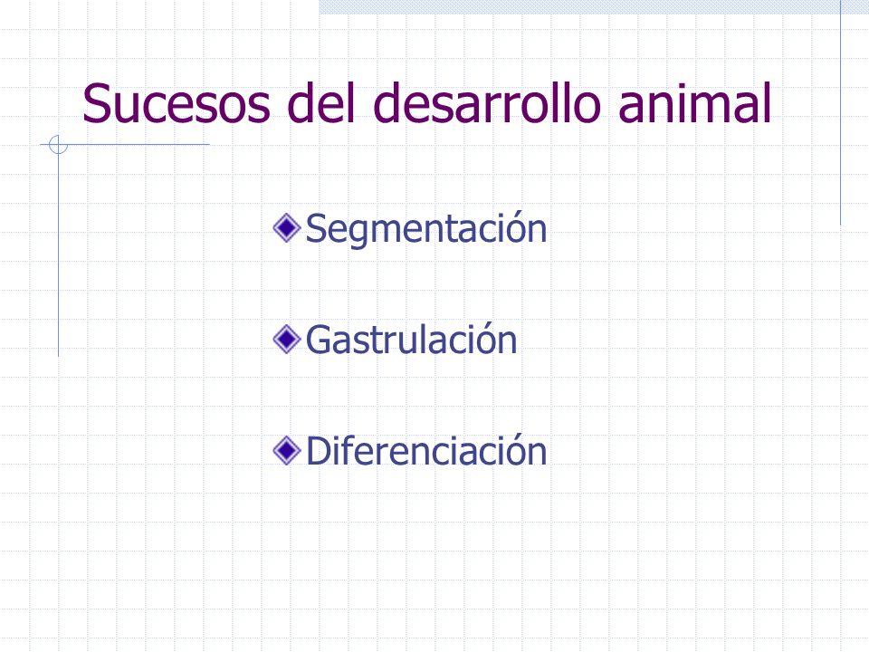 Sucesos del desarrollo animal