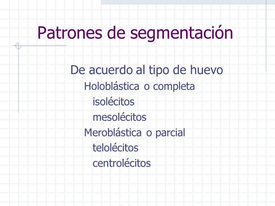 Patrones de segmentación