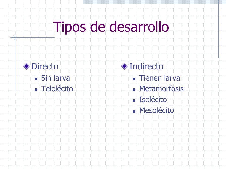 Tipos de desarrollo Directo Indirecto Sin larva Telolécito