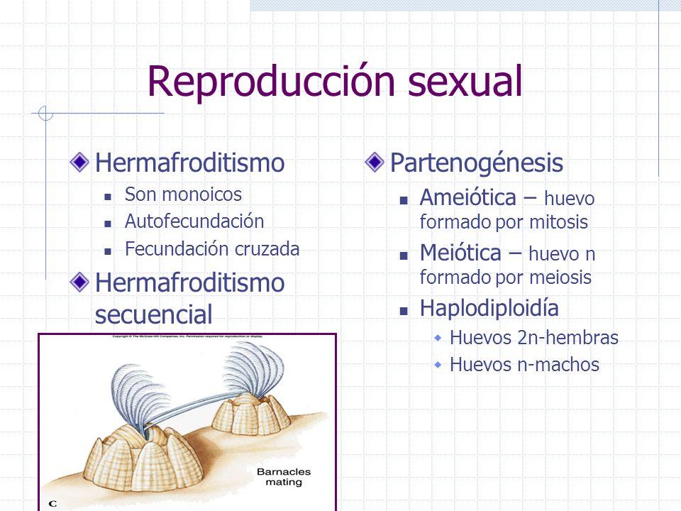 Reproducción sexual Hermafroditismo Hermafroditismo secuencial