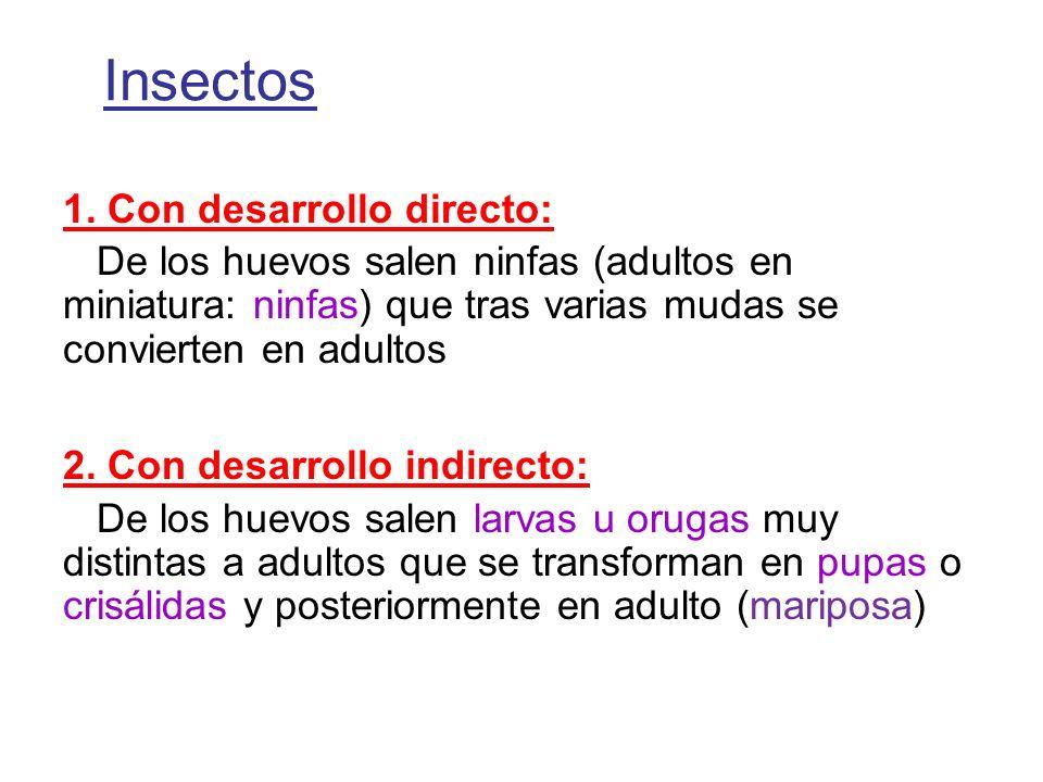 Insectos 1. Con desarrollo directo: