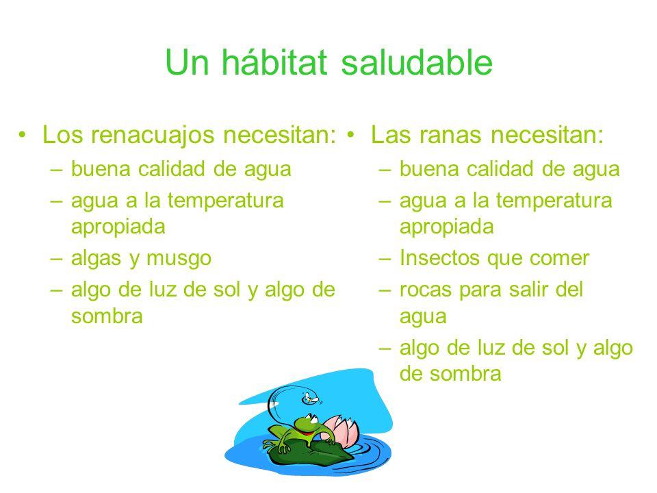 Un hábitat saludable Los renacuajos necesitan: Las ranas necesitan: