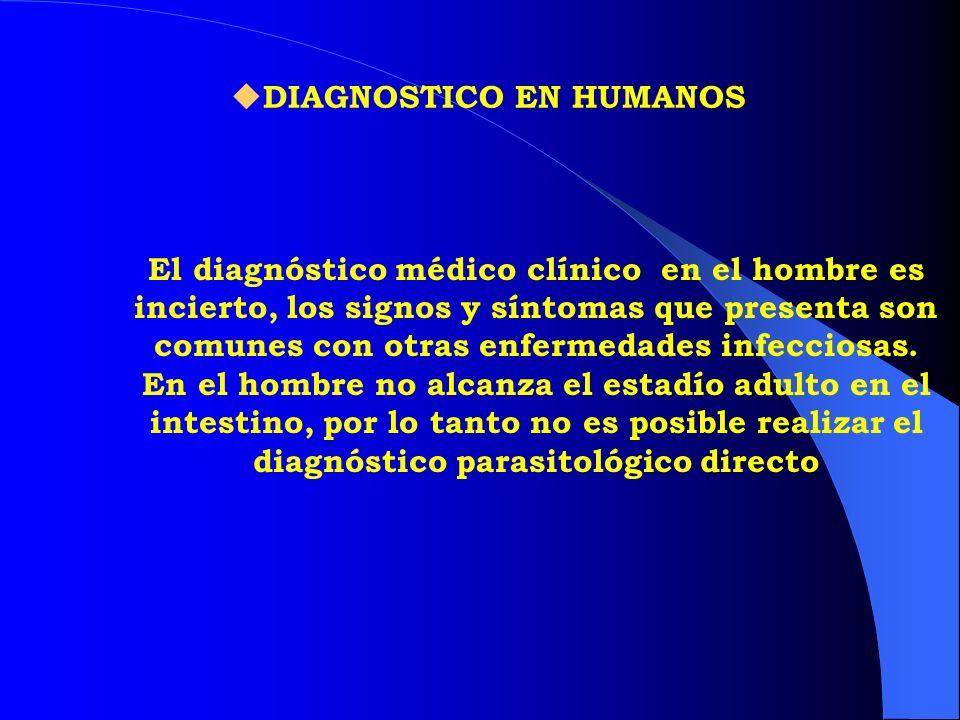 DIAGNOSTICO EN HUMANOS