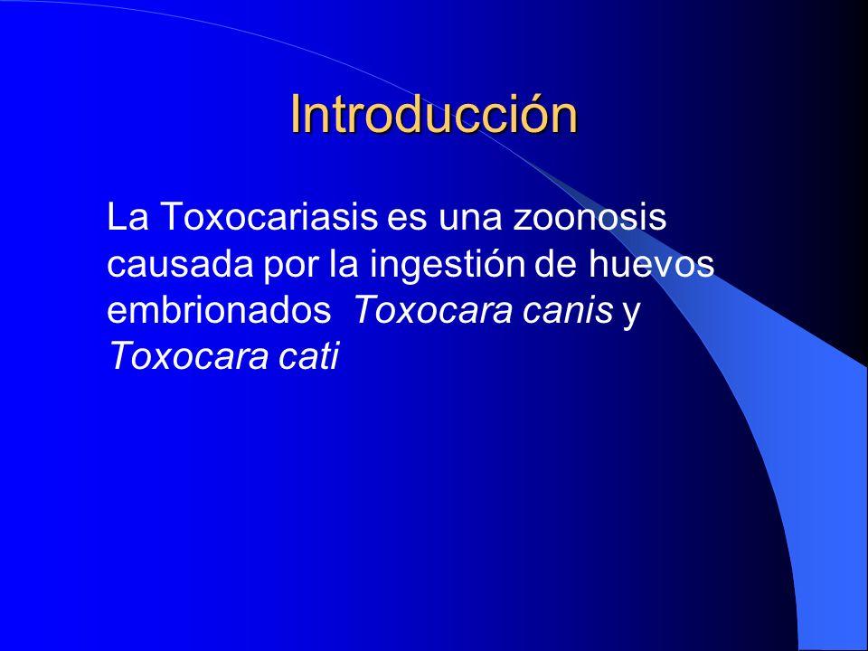 Introducción La Toxocariasis es una zoonosis causada por la ingestión de huevos embrionados Toxocara canis y Toxocara cati.