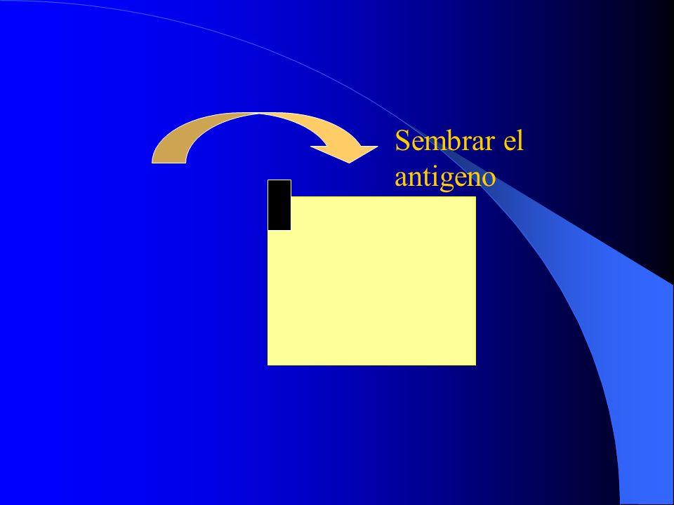Sembrar el antigeno
