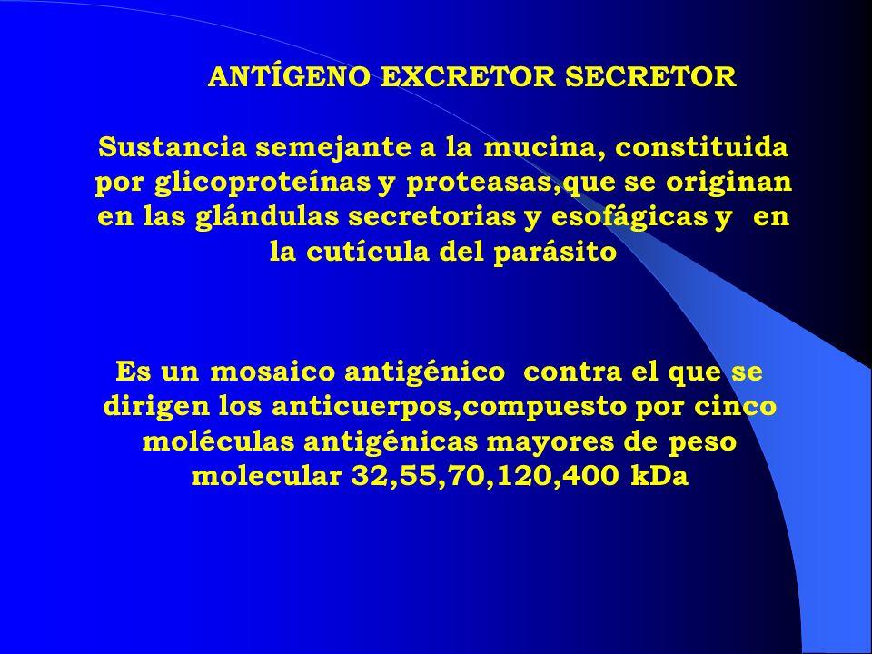 ANTÍGENO EXCRETOR SECRETOR