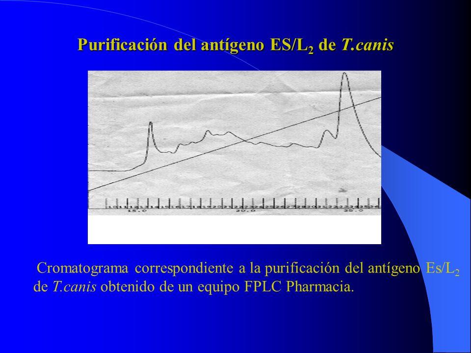 Purificación del antígeno ES/L2 de T.canis