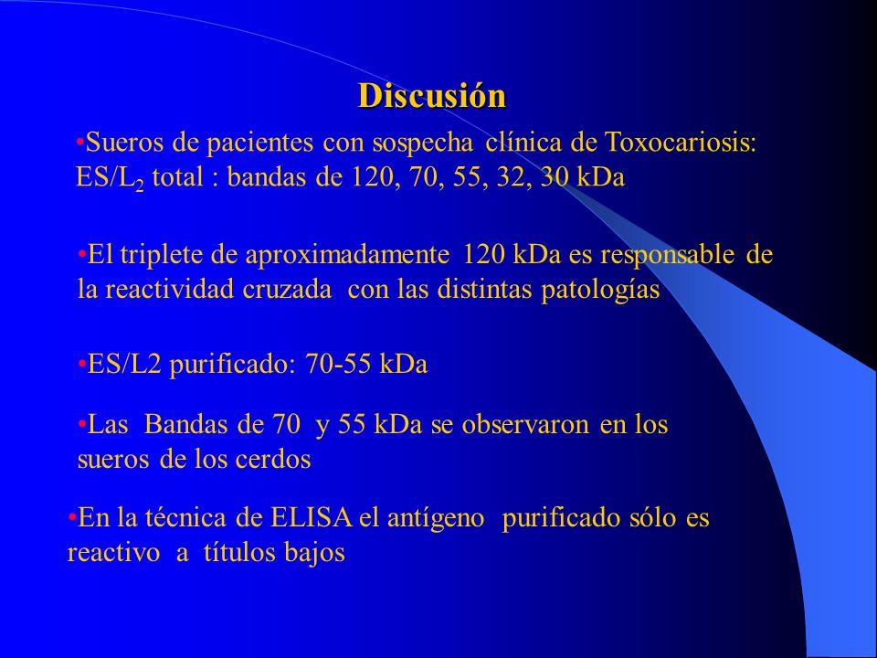 Discusión Sueros de pacientes con sospecha clínica de Toxocariosis: